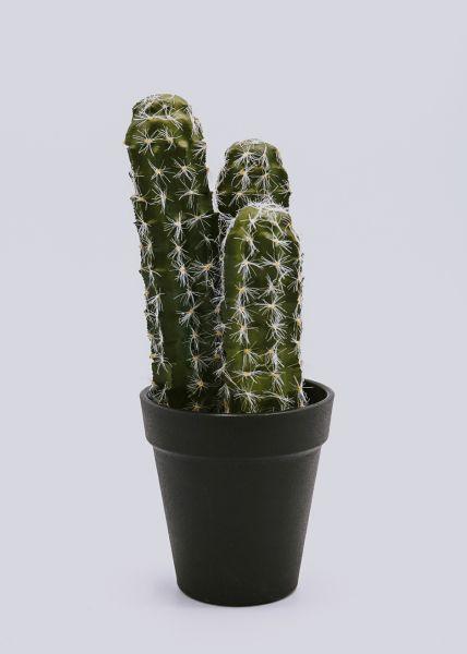 Kaktus in schwarzem Topf